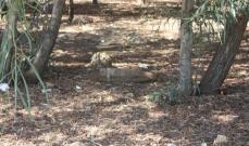 القنابل العنقودية خطر دائم يلاحق الجنوبيين: 60 ضحيّة وأكثر من 450 جريحاً