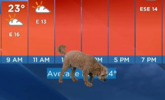 كلب يقتحم الاستوديو أثناء بثّ نشرة الأرصاد الجوية على الهواء مباشرة