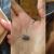 إصابة مواطنة في وادي خالد برصاصة طائشة وحالتها حرجة